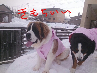fc2_2014-01-09_12-02-52-969.jpg