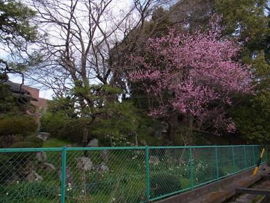 20130323_hiko_6.jpg