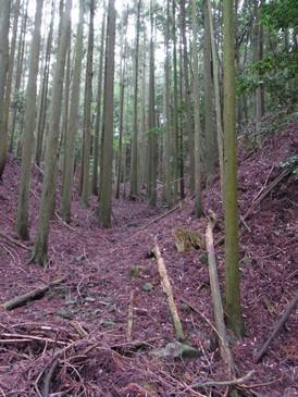 20130623_kurokawa_6.jpg