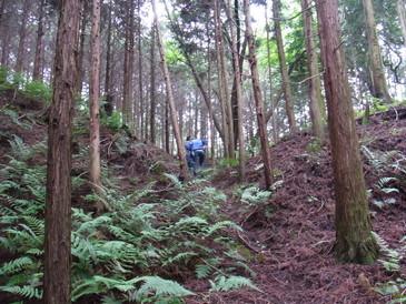 20130623_shingushijo_4.jpg