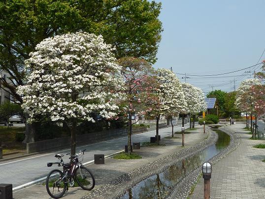 2012_0425戸田別館 0004