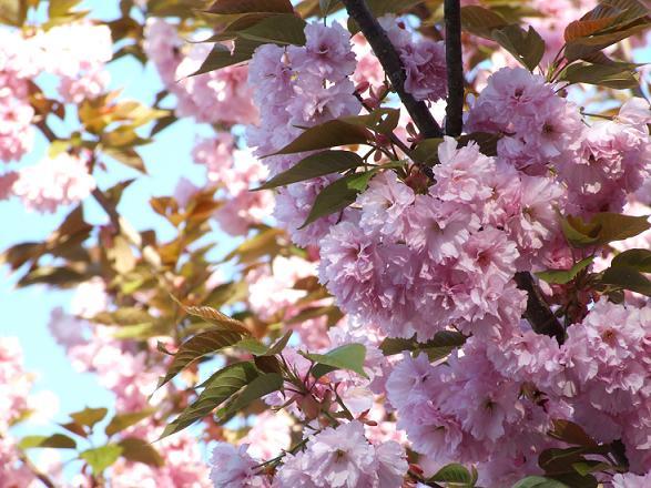 2012_0512戸田別館 0022