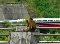 ラブラブの猿さん