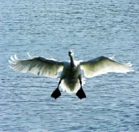landing 1