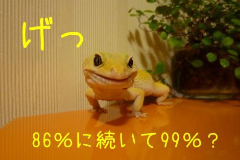 P1070748.jpg