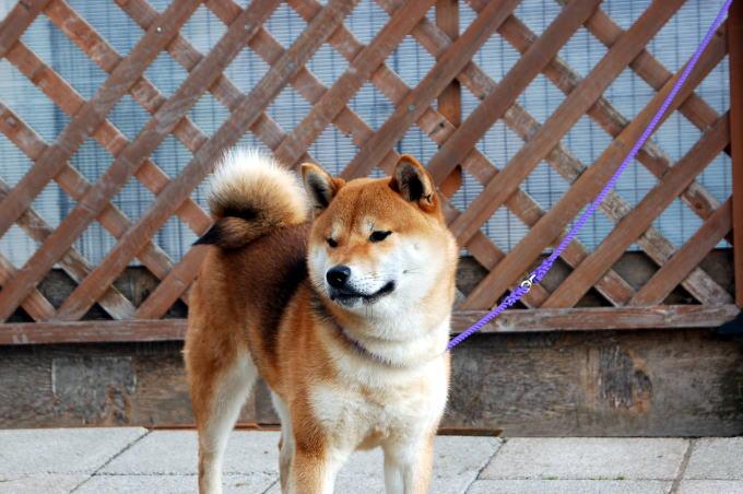 yasuDSC_0003120506.jpg