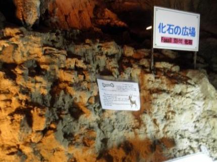 化石の広場