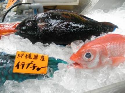 青い魚イラブチャー