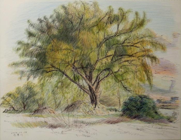 川べりの木立 2