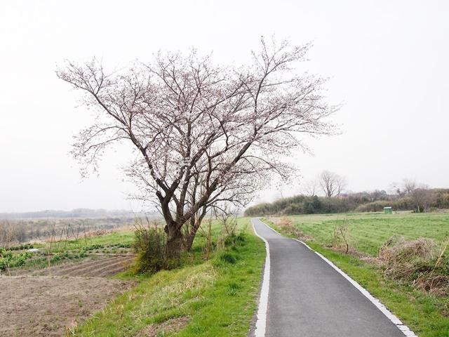 荒川サイクリング (2)