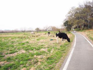 荒川サイクリング (3)