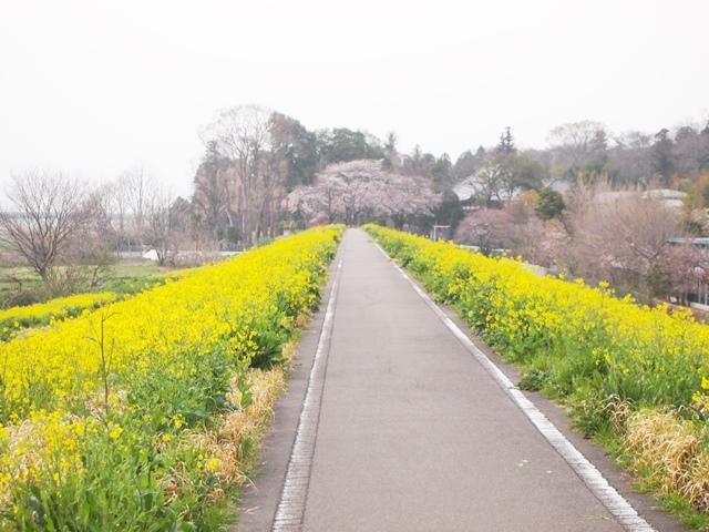 荒川サイクリング (10)