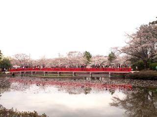 岩槻城址公園 (4)