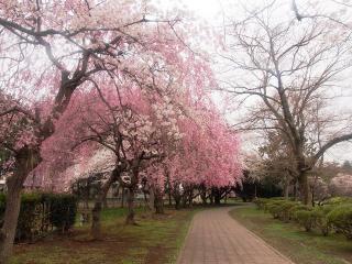水城公園 (2)