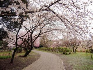 水城公園 (3)