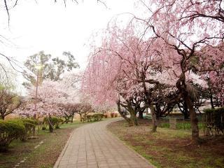水城公園 (6)