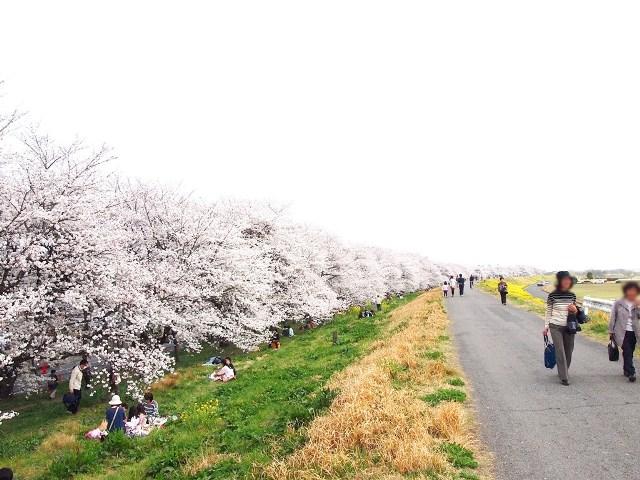 熊谷桜堤 (9)