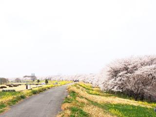 熊谷桜堤 (14)