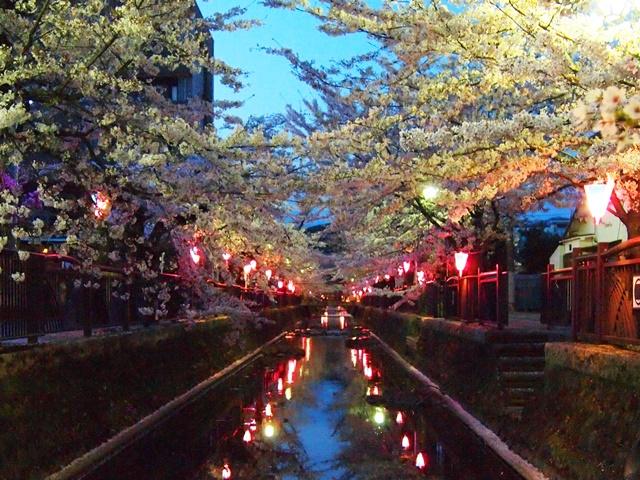 八瀬川桜祭り3