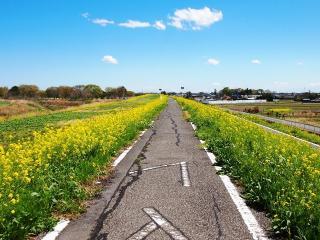 荒川自転車道 (16)