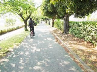 久喜・菖蒲公園 (2)