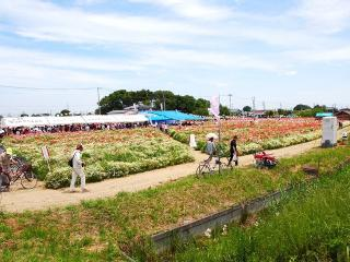 菖蒲ポピー祭 (1)