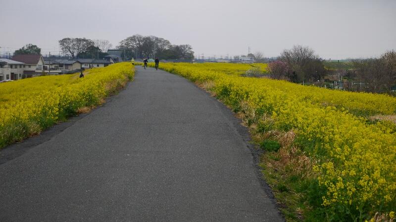 熊谷桜堤05
