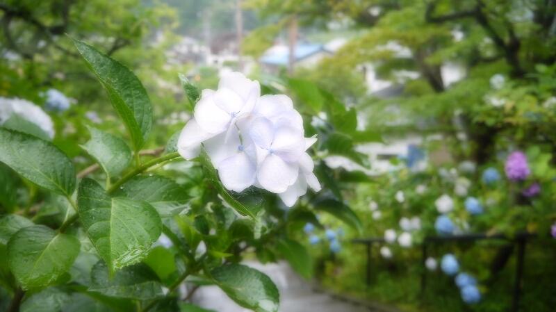 東慶寺02