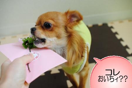 バラ食べる