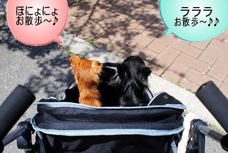 お散歩へGO