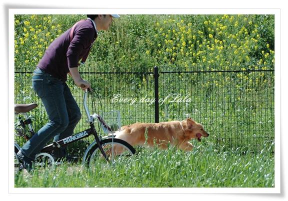 自転車と走る0428