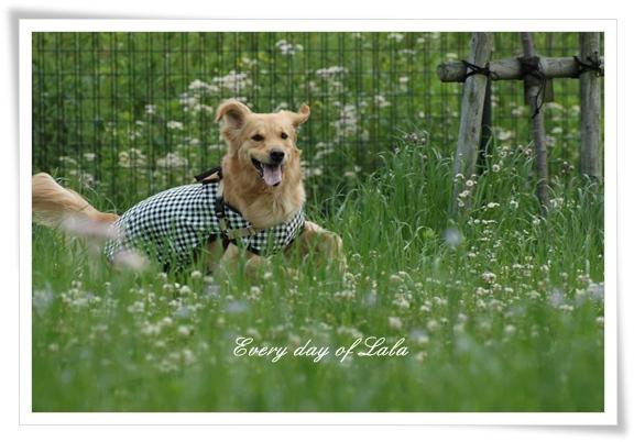 チェック柄の洋服201205