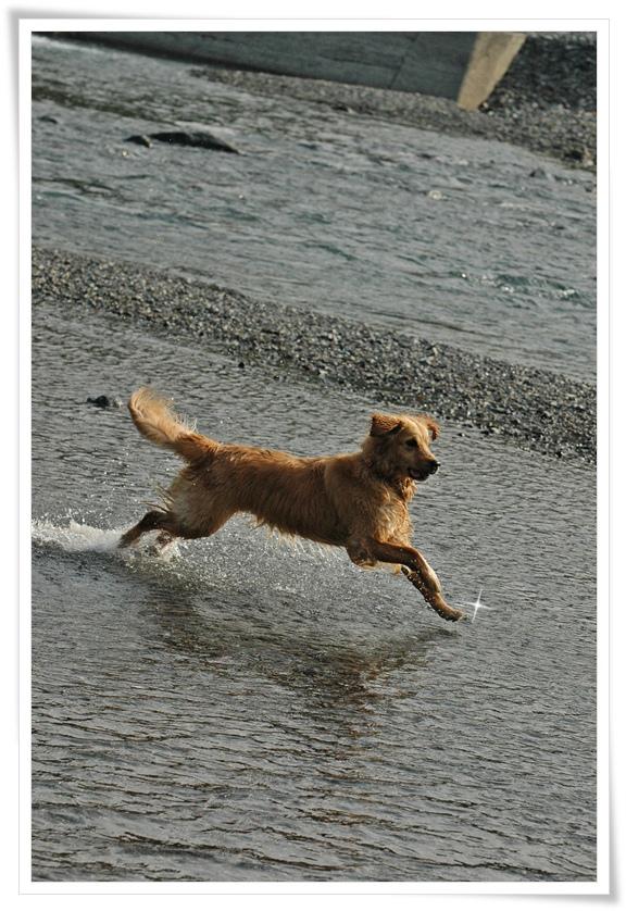 キャンプのララ川を跳ねる201205