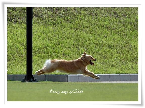 飛行犬2201205