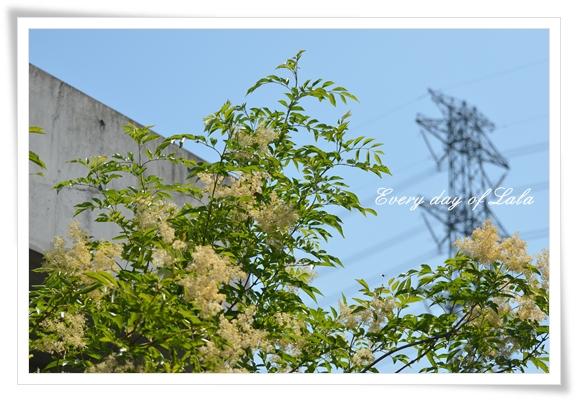 新緑201207