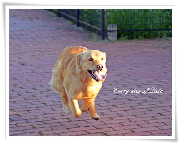 飛行犬201207