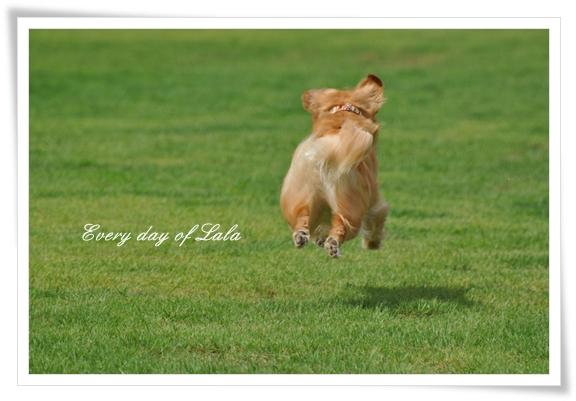 飛行犬かな201207