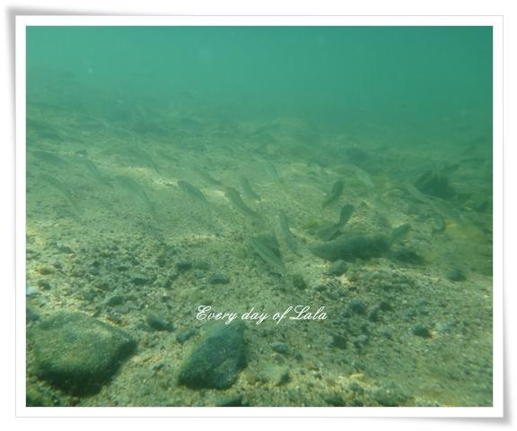 水中の魚201208