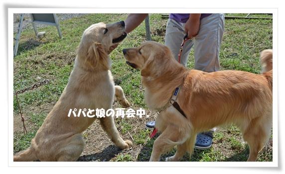 パパとの再会201209