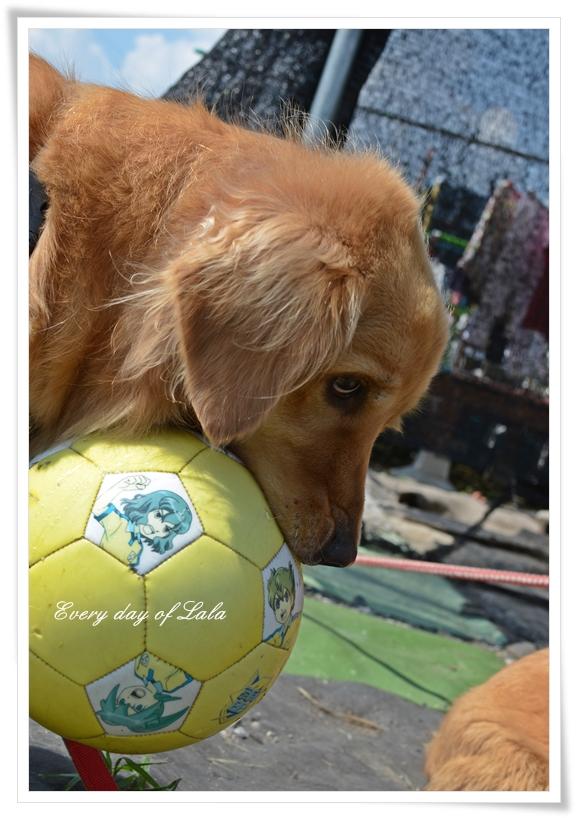 ボールに夢中過ぎる・・・201209