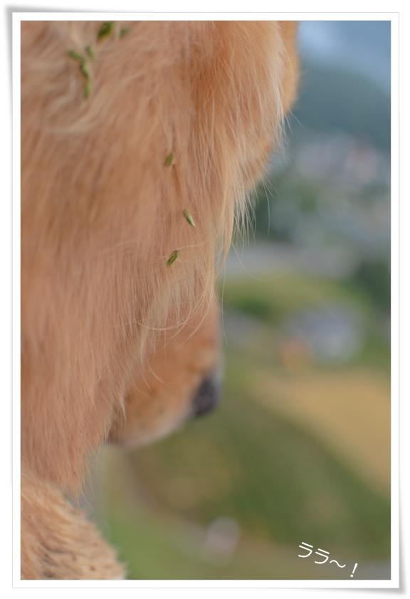 ララ気球に乗る1_201210