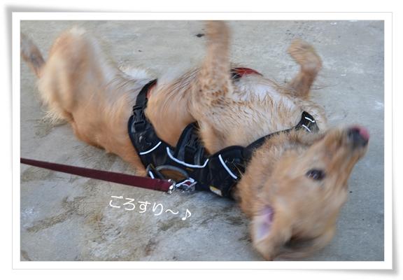 天王山ごろすり201211