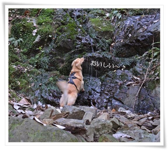天王山湧き水201211