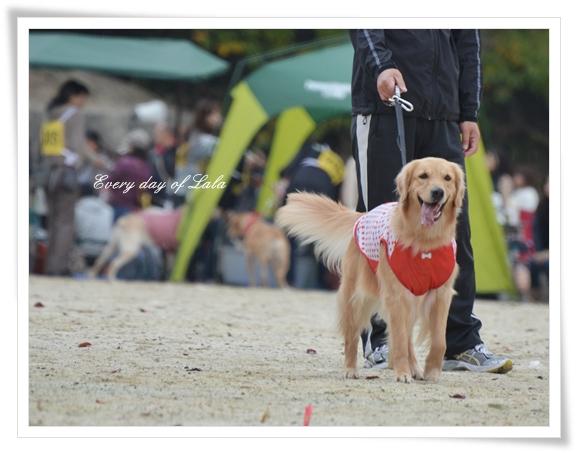 ワンワン運動会へ201211