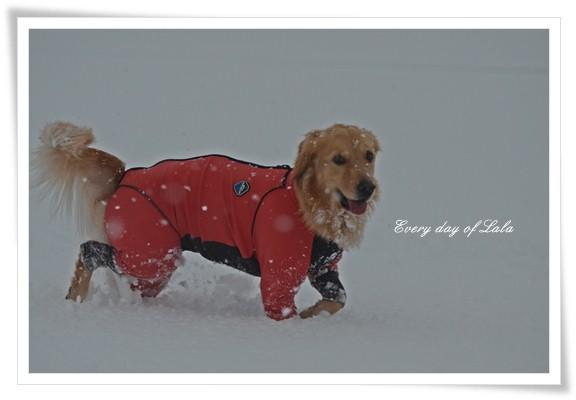 雪だーい201212