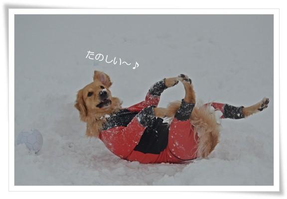 雪ってたのしいね201212