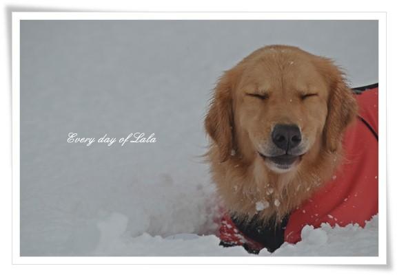雪ってつめたい!201212