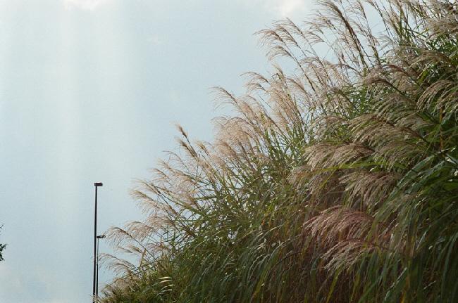 2012-10-nature3.jpeg