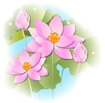 a image hasu-ic1