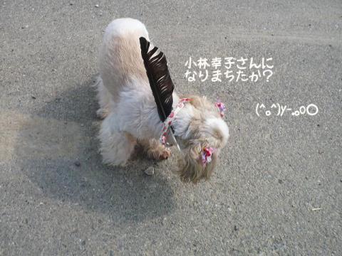 4_20120608105321.jpg